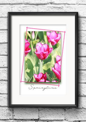 Poster Frühling Tulpen pink