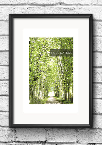 Poster Frühling Baumallee grün