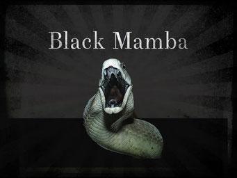 Mamba noir : le baiser de la mort / National Geographic