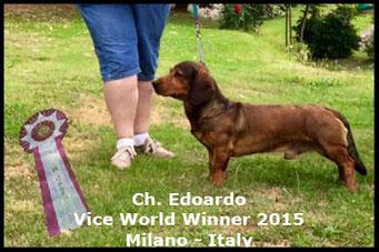Vice World Winner - Worlddogshow Milan 2015