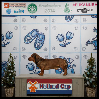 BOB - Holland Cup 2015