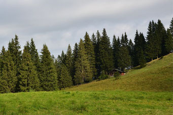 Ab der Kaseralm lässt man langsam den Wald hinter sich