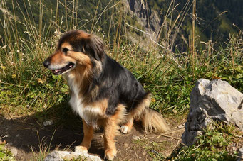 Der Gipfelhund vom Heimgarten