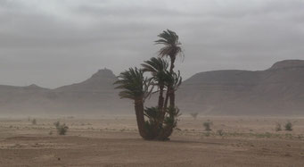 AUF DEM WEG IN DIE *SAHARA*