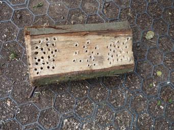 Nisthilfen bauen für Wildbienen