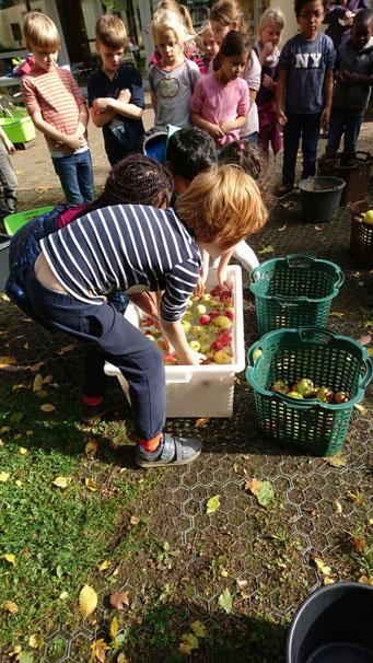 Apfelfest - Äpfel waschen