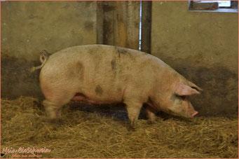 Sehen was man isst | Mein BioSchwein