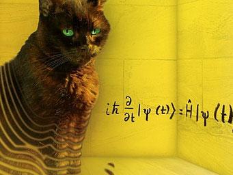 Erwin Schrödingers Katze