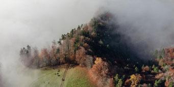 Rinder an der Nebelobergrenze.