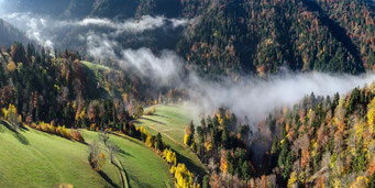 Letzte Nebelreste lösen sich über dem Tösswald auf.
