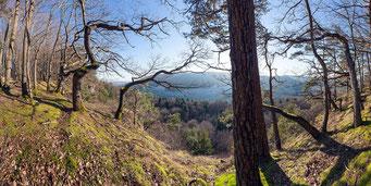 Die beste Fernsicht hat man von der Plateaukante des «Stein» im Winter, wenn die Laubbäume kahl sind. Stellenweise reciht der Blick dann bi szu den Alpen.