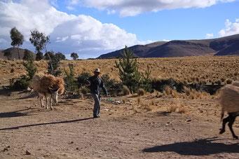 Lastentransport im Altiplano