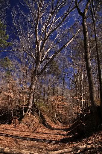 Nachez Trace - der alte Weg