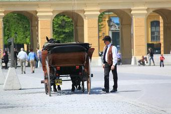 Fiakerl, Schönbrunn