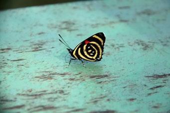 ... noch mehr Schmetterlinge...