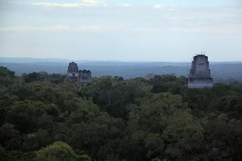 Urwald mit Ruinen, Tikal