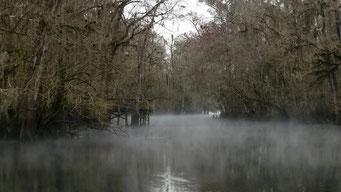 Mystische Manatee Springs State Park, FL, USA