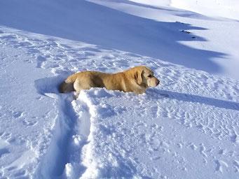 Bruno der Lawinenhund