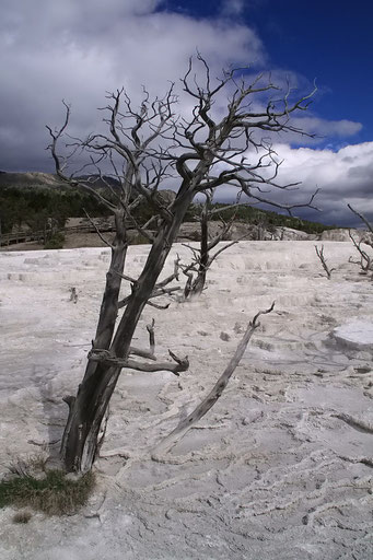 Mammoth Hot Spring, Yellowstone N.P.