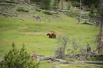 Zum ersten mal ein Bär gesichtet