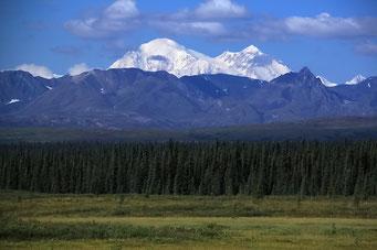 Sicht zum Mount McKinley (Denali), Parks Highway, Alaska