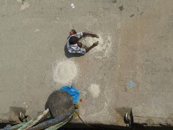 ... Reis, der aus den Säcken fällt, wird zusammengewischt und anschliessend gesäubert.