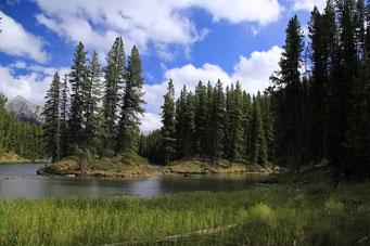 Moose Lake, Jasper N.P.