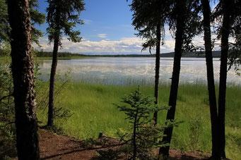 Tetlin N.W.R., Alaska