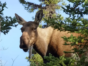 Besuch auf dem Camping, Denali N.P., Alaska