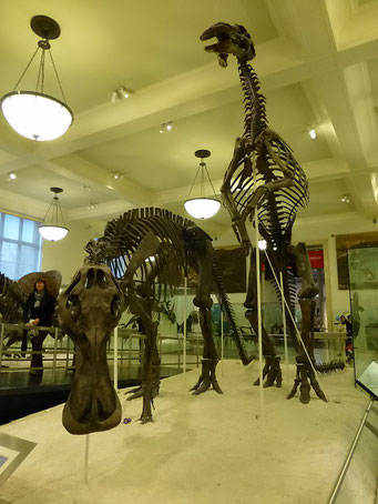 Museum of Natural History, New York City