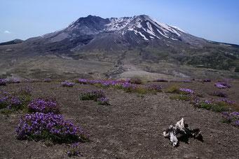Mount St. Helen heute