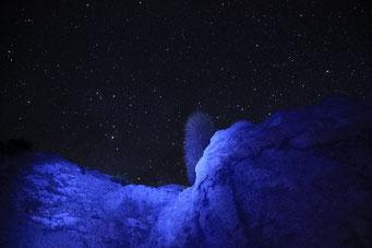 Isla de Pescadores - Kaktee am Nachthimmel