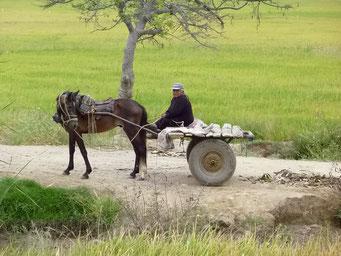 Einfacher Transport auf dem Land