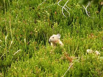 Ein Hamster beobachtet uns...