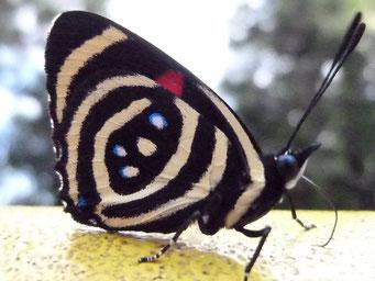 ... Schmetterlinge...