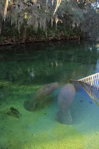 Blue Springs State Park, FL, USA
