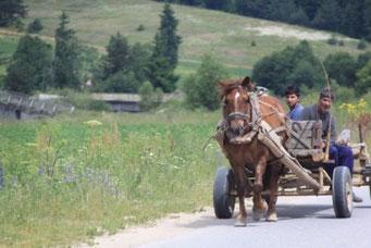 Pferdewagen sind immer noch ein verbreitetes Transportmittel