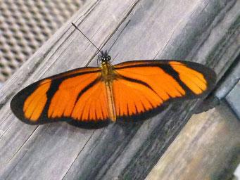 ... und Schmetterlinge ohne Ende...