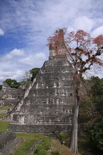 Die Hauptpyramide von Tikal
