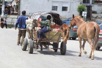 Sehr oft sind es Zigeuner die mit Ross und Wagen unterwegs sind