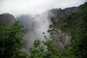 ... die Vegetation wird immer tropischer
