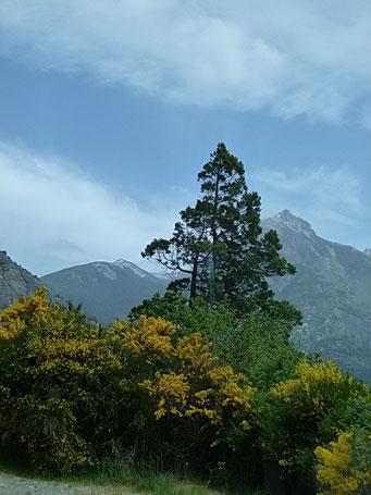 Nahuel Huapi N.P. - ...doch die Natur blüht bereits wieder