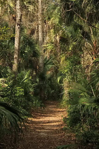 Highland Hammock State Park, FL, USA