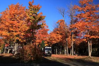 Campieren im schönen Herbstwald, Ontario