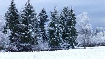 ...und in Finsterwald