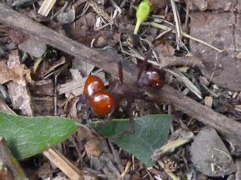 ... Photosafari...(ist eine Ameise!)