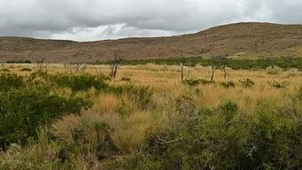 Savannenlandschaft im Liuhel Calel N.P.