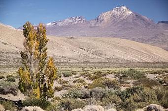 Valle El Sosneado