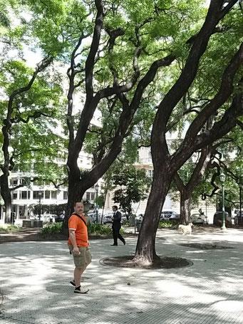 ... überalle finden sich Bäume...