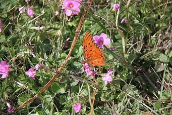 Schöne grosse Schmetterlinge